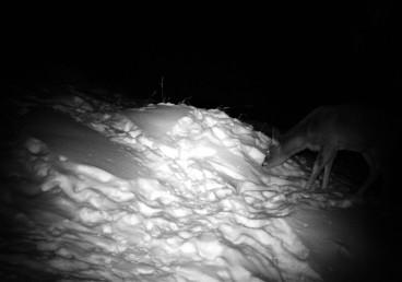 deer below zero